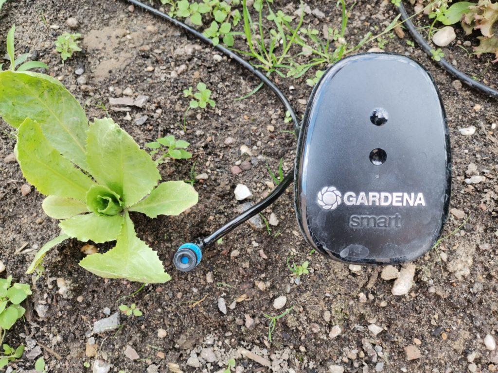 Sensor Bewässerung