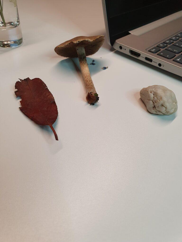 Blatt Pilz und Stein